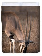 Oryx Oryx Beisa, Samburu National Duvet Cover