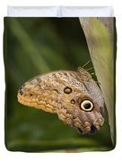 Owl Butterfly Caligo Idomeneus Resting Duvet Cover