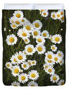 Ox-eyed Daisies, Banff National Park Duvet Cover