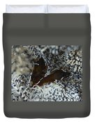 Pair Of Brown Snapping Shrimps Duvet Cover