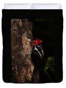 Pale-billed Woodpecker Duvet Cover