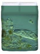 Paramecium Feeding Lm Duvet Cover