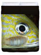 Parasitic Isopod On Grunt, Belize Duvet Cover