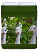 Peacocks Duvet Cover