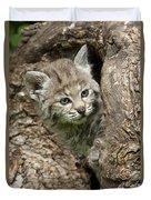 Peeking Out - Bobcat Kitten Duvet Cover