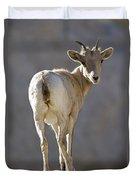 Peninsular Bighorn Sheep Ovis Duvet Cover
