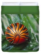 Pill Millipede Glomeris Sp Rolled Duvet Cover by Cyril Ruoso