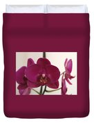 Pink Phalaenopsis Orchid  Duvet Cover