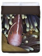 Pink Skunk Clownfish In Its Host Duvet Cover