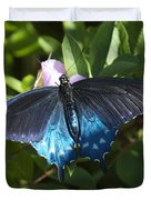 Pipevine Swallowtail Din003 Duvet Cover