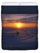 Polar Bear In Arctic Sunset Duvet Cover