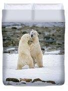 Polarbears, Churchill, Manitoba Duvet Cover