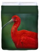 Portrait Of A Captive Scarlet Ibis Duvet Cover