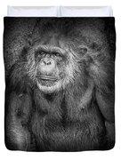 Portrait Of A Chimpanzee Duvet Cover