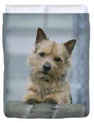 Portrait Of A Norwich Terrier Duvet Cover