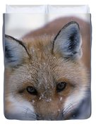 Portrait Of Adult Red Fox Duvet Cover