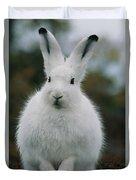Portrait Of An Arctic Hare Duvet Cover