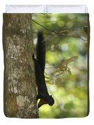 Prevosts Squirrel Facing Downward Duvet Cover