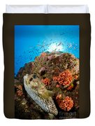 Pufferfish And Reef, La Paz Mexico Duvet Cover