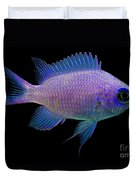 Purple Chromis Duvet Cover