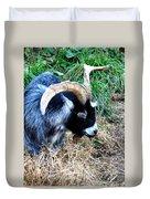 Pygmy Goat Duvet Cover