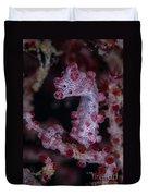 Pygmy Seahorse, Australia Duvet Cover