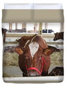 Red And White Cow In A Stable Close Up Duvet Cover