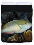 Red-banded Parrotfish Bonaire Duvet Cover
