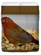 Red Billed Fire Finch Duvet Cover