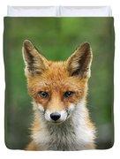 Red Fox Vulpes Vulpes, Hoge Veluwe Duvet Cover