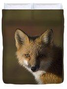 Red Fox Vulpes Vulpes Portrait, Alaska Duvet Cover