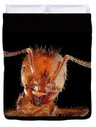 Red Imported Fire Ant Solenopsis Duvet Cover