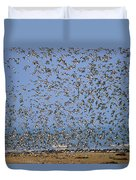 Red Knot Calidris Canutus Flock Flying Duvet Cover