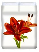 Red Lily Number One Square Duvet Cover