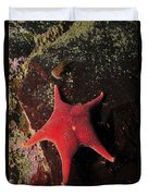 Red Sea Star And Limpet On Brown Rock Duvet Cover