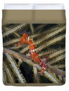 Red Seahorse On Caribbean Reef Duvet Cover