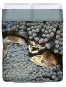 Red-spotted Porcelain Crab Hiding Duvet Cover