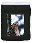 Red-tailed Hawk - Hawkeye Duvet Cover