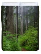 Redwoods Along Ossagon Trail Duvet Cover