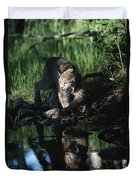 Reflection Of Lynx In Stream Idaho, Usa Duvet Cover