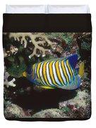 Regal Angelfish In Coral Reef Duvet Cover