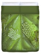 Reticulated Glass Frogs And Eggs Duvet Cover