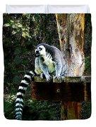 Ring-tailed Lemur Duvet Cover