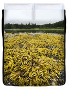 Rock Weed Fucus Gardneri At Low Tide Duvet Cover