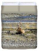 Rocky Mountains Elk Duvet Cover