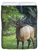Roe Deer In Forest, Canadian Duvet Cover