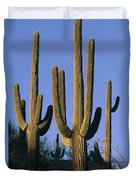 Saguaro Cacti In Desert Landscape Duvet Cover