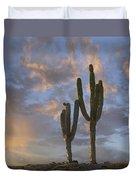 Saguaro Carnegiea Gigantea Cacti, Cabo Duvet Cover