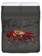 Sally Lightfoot Crab Duvet Cover