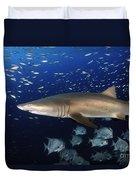 Sand Tiger Shark Swimming In Blue Water Duvet Cover